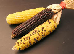 picture of corn