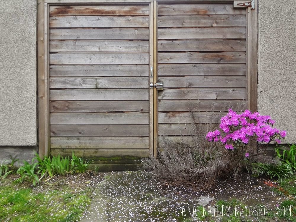 Pink flowers in front of a wooden door
