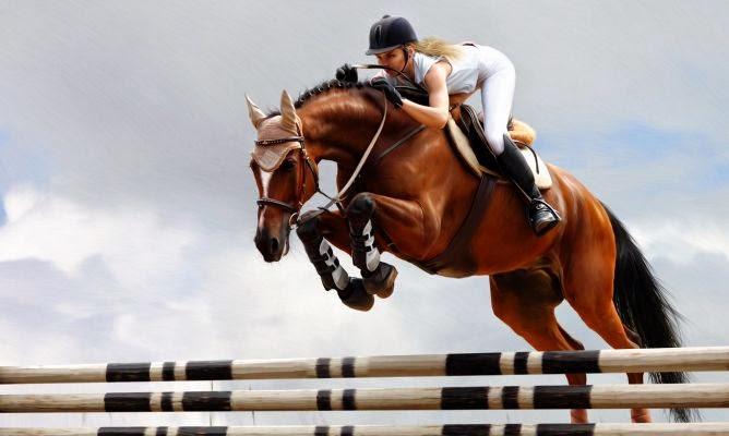 Equus B&M