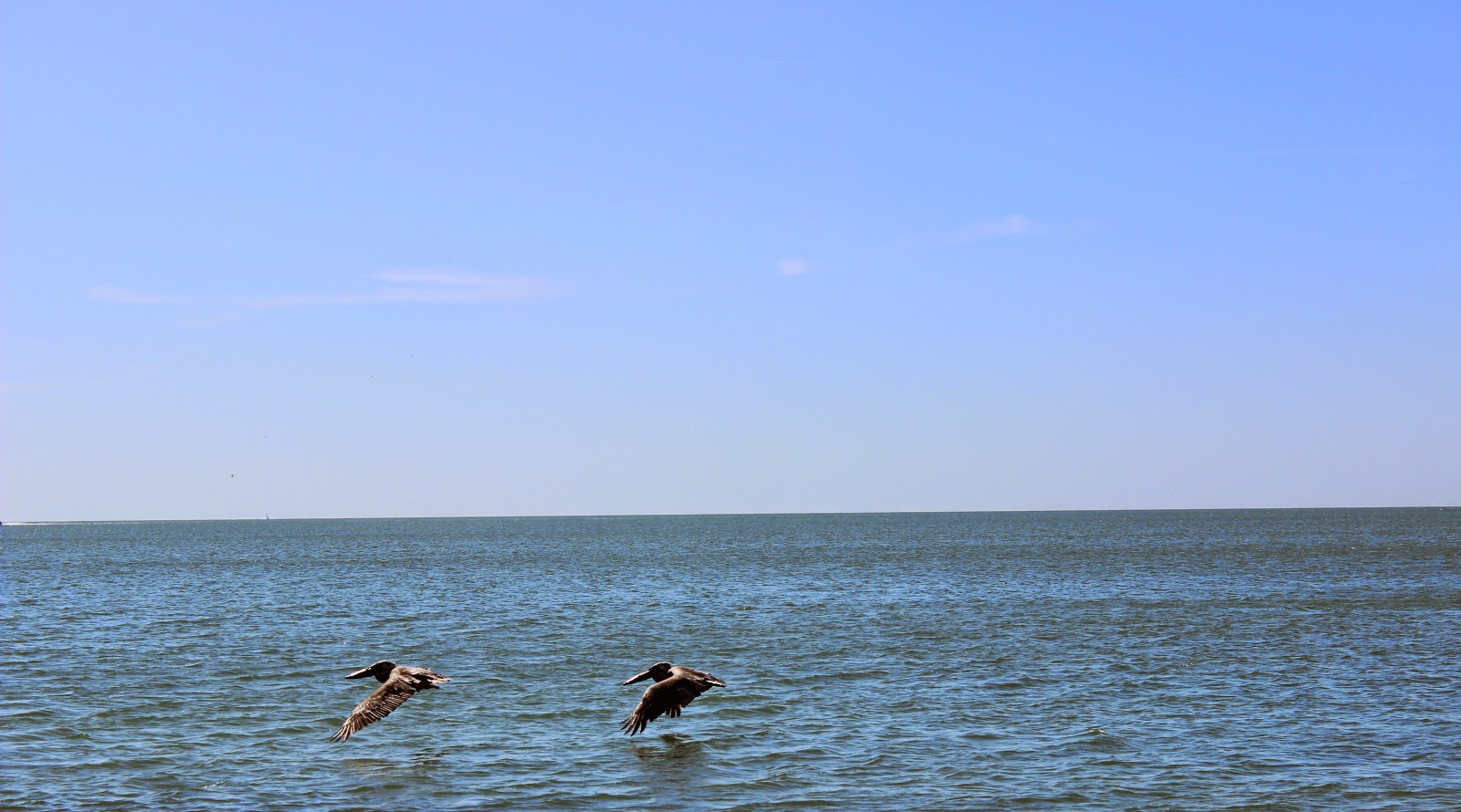 pelicans flying over St. Pete Beach, FL