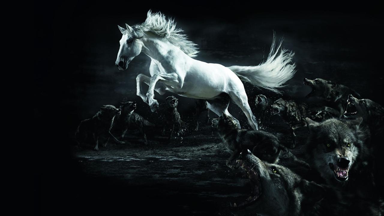 Cool   Wallpaper Horse Angel - White+Horse+Wallpapers+2  Gallery_734377.jpg