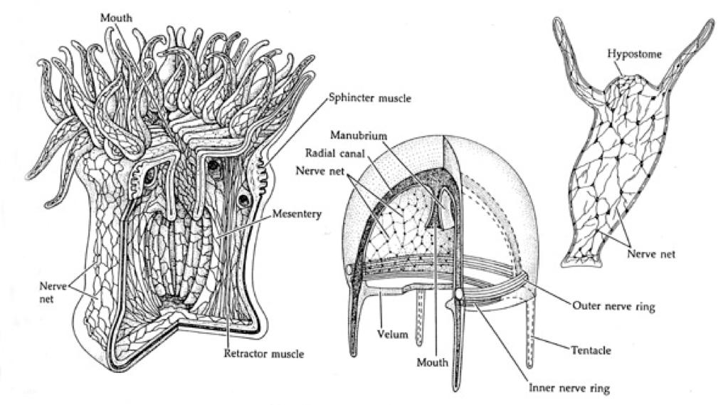 onu invertebrate zoology  lecture