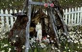 Cementerio indígena de Navarino