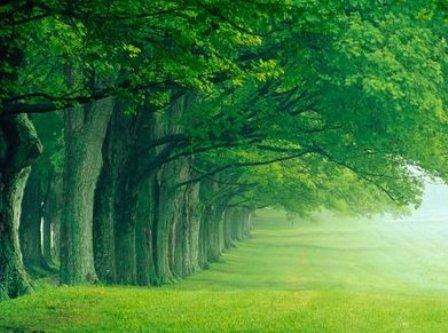 desktop wallpaper nature hd. Green Nature Full HD