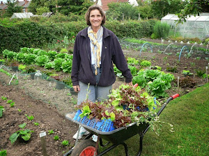 Lettuces galore