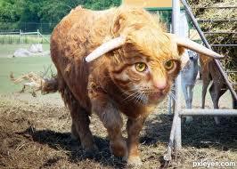 bullcat.jpg