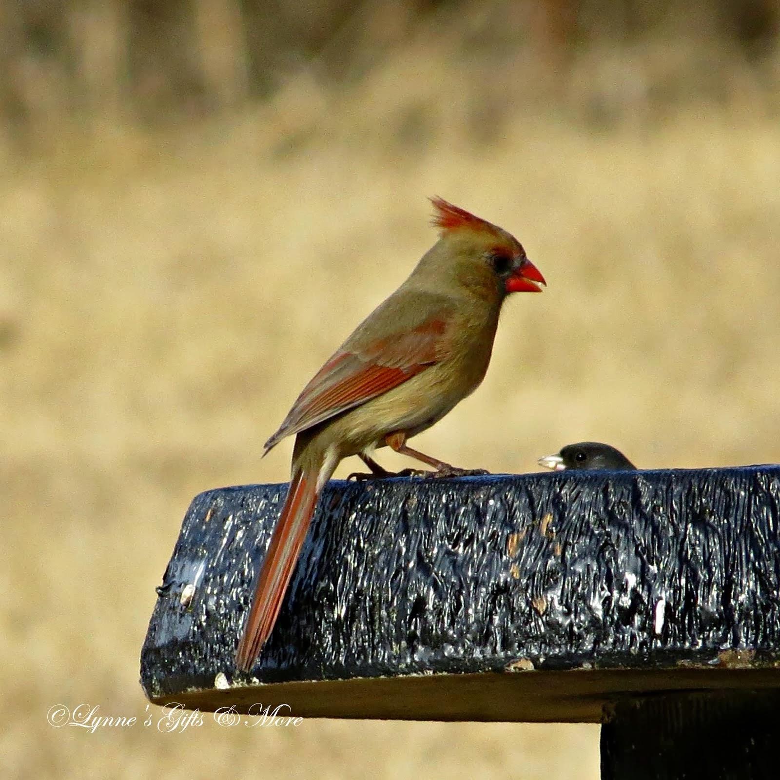 Cardinal Haven