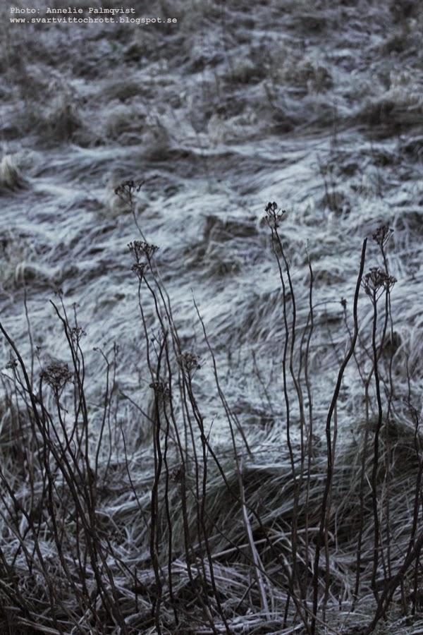 strandpromenaden i varberg, havet, vinterbild, vinterbilder