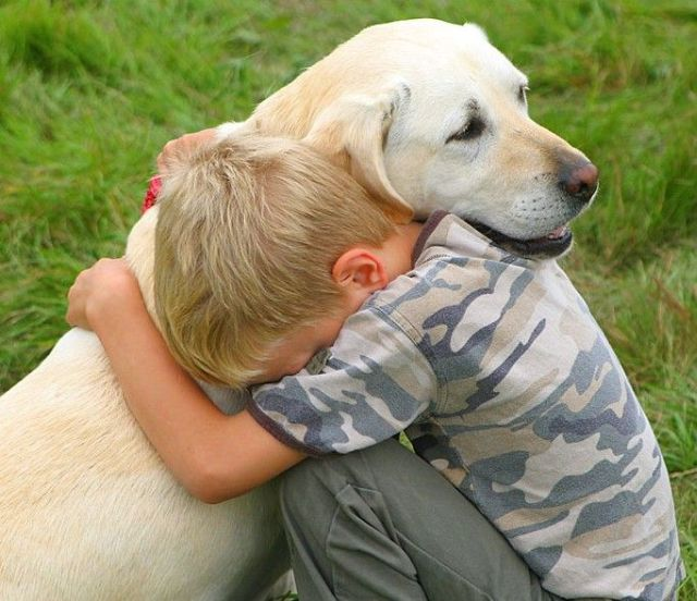 How To Get Rid Of Depression In Dogs