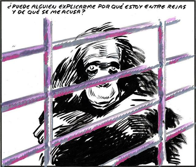 explotacion,animal,derecho