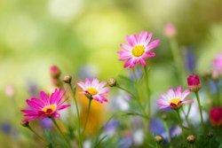 60 fotografías de las flores más hermosas del mundo