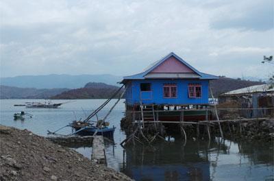 Ada Kambing Makan Uang Di Pulau Unik Bungin
