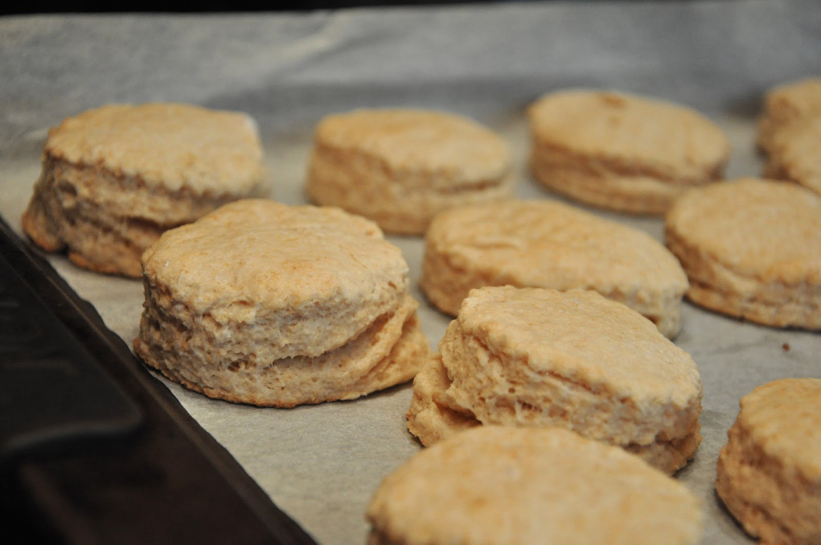 Sophia's Sweets: Fluffy Whole Wheat Biscuits