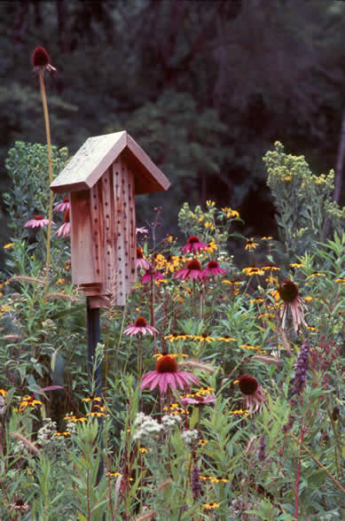 how to make a home for native bees