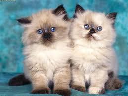 Que es mejor comprar una gata o un gato
