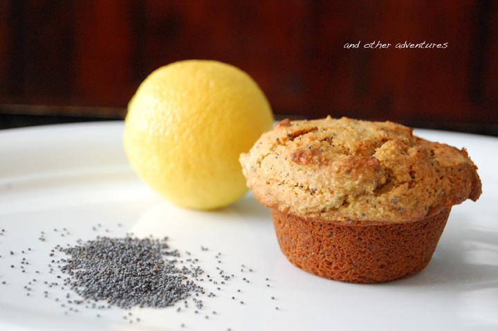 lemon poppy seed almond flour muffins