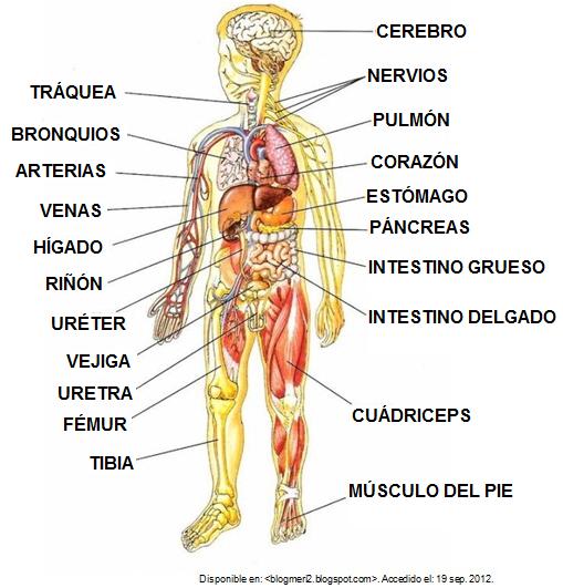 imagenes cuerpo humano: