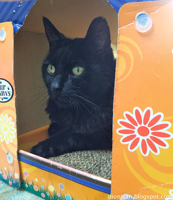Troy the cat is in the cat scratcher doghouse