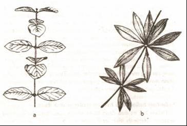 Gambar a. Berhadapan bersilang b. Berkarang
