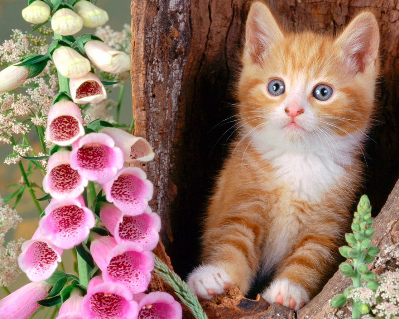 Cute Animal Wallpapers For Desktop Background Full Screen