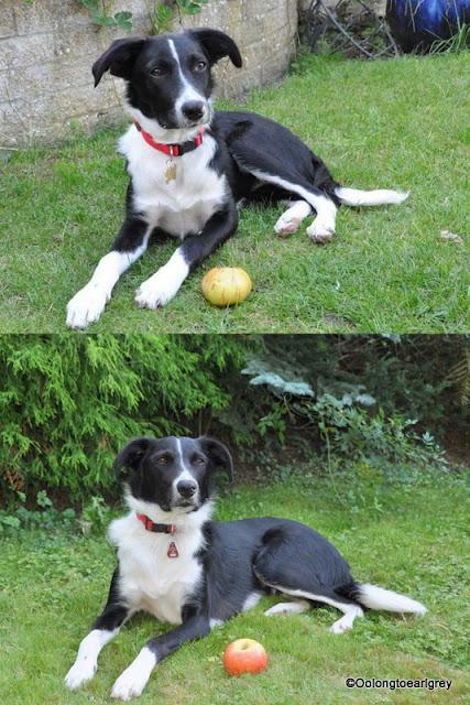 Ralph the dog