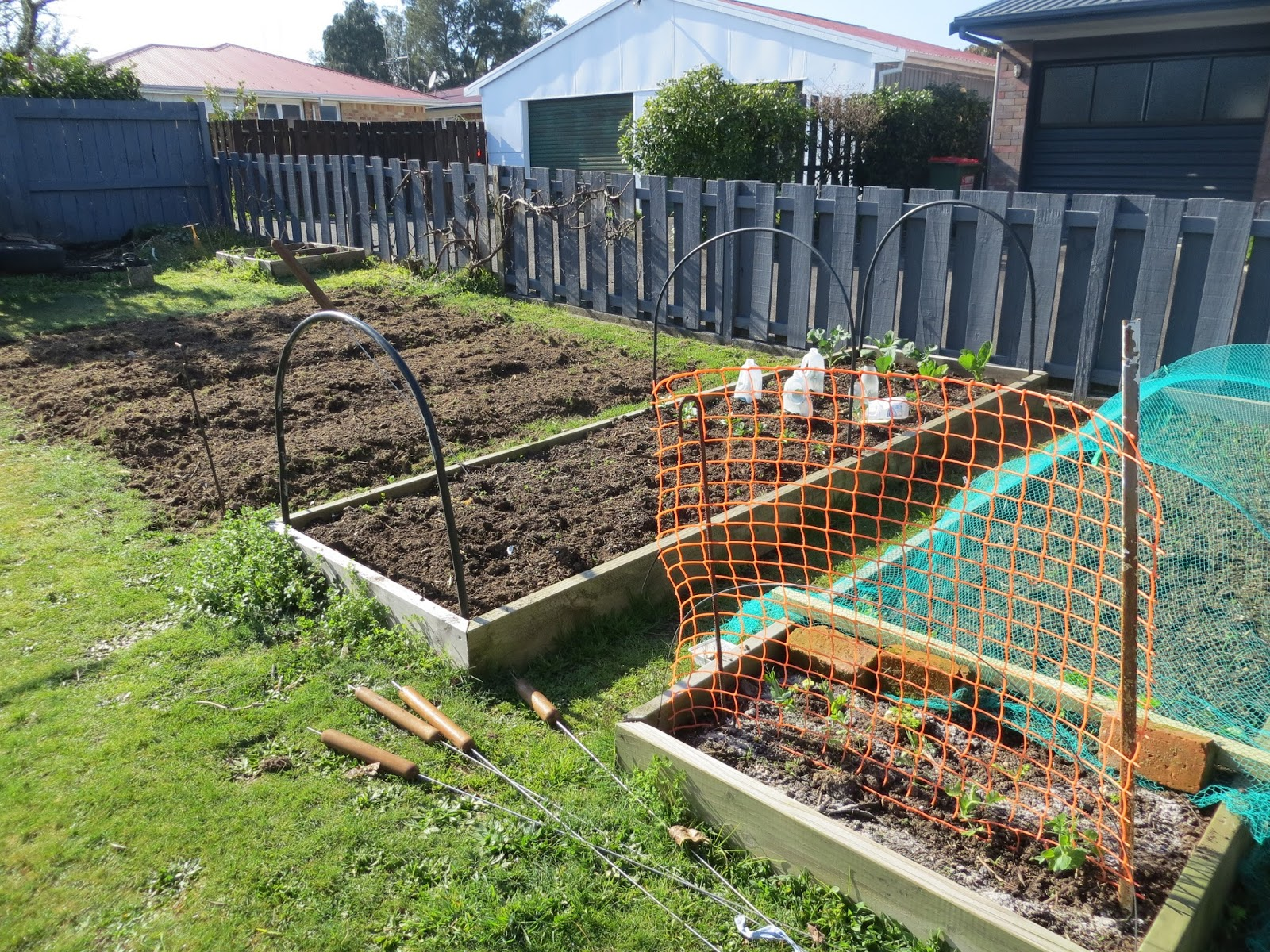 keeping chickens nz charlie u0027s new chooks how he started from scratch