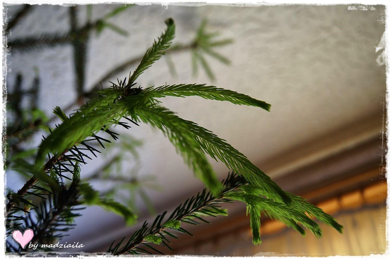 Problem z drzewkiem i nowe poduchy...