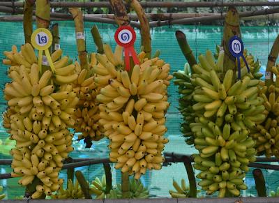 ประเพณีสารทไทยกล้วยไข่เมืองกำแพง