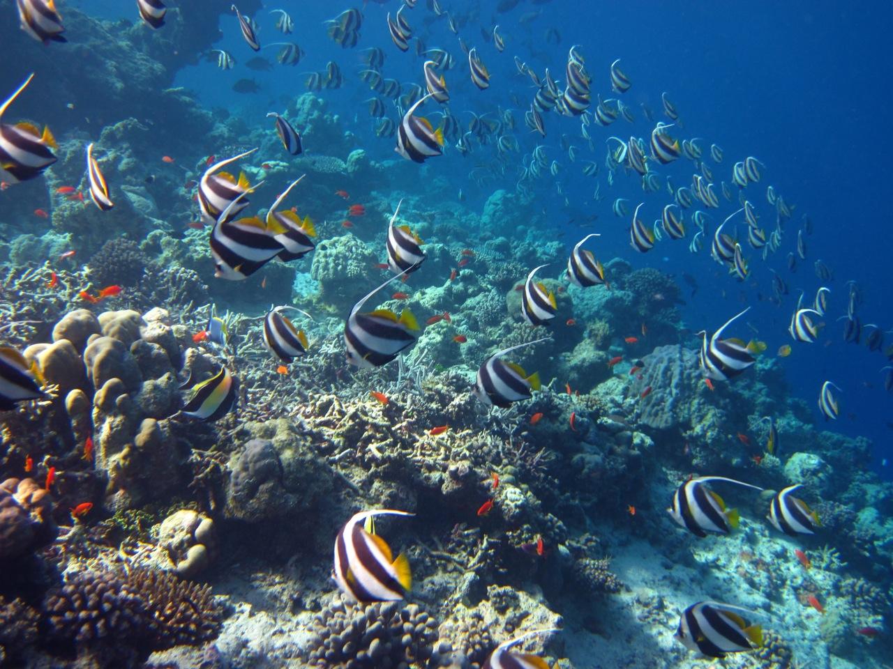 Maldive con la testa sott 39 acqua traveltik the blog for Incollare sott acqua