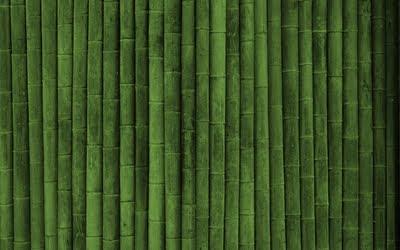 sfondo verde bambu