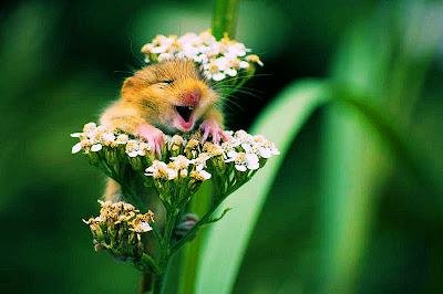 Wow, qué lindas flores... Y de pilón, ¡un ratón!