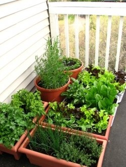 Everyday Finesse: Pinterest gardening ideas