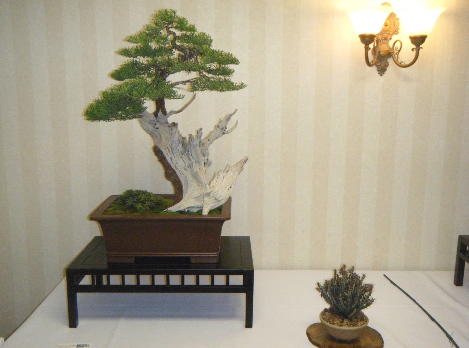 Bonsai In Hoosierland MABA 2015 Convention A Fine Job