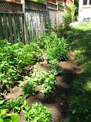 Toronto garden cleanup after by paul jung ecological and organic gardening services