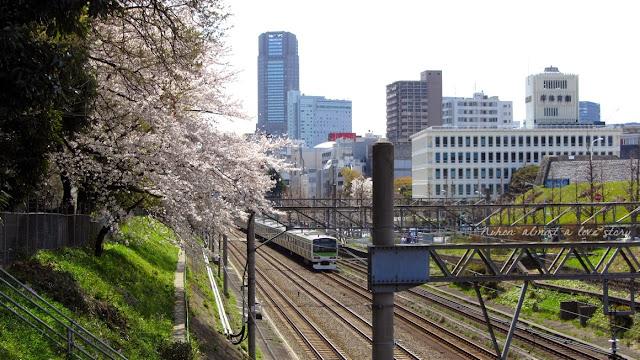 Train and sakura