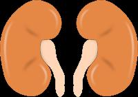 Le cancer du rein affecte souvent les hommes environ deux fois plus que les femmes