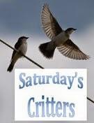Saturday Critters