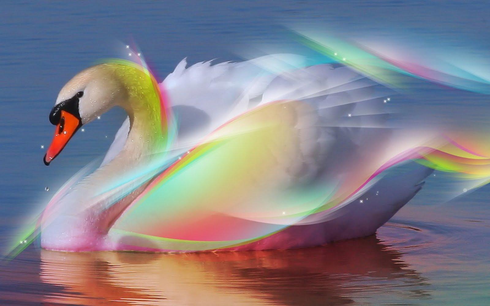 Fondos de pantalla aves bonitos cisnes car interior design for Imagenes bonitas para fondo de pantalla
