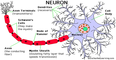 Jaringan saraf