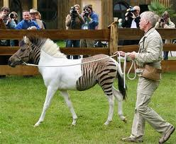 Strange Animals You Won't Believe Aren't Photoshopped  أغرب الكائنات ليس عمل فوتوشوب Part2