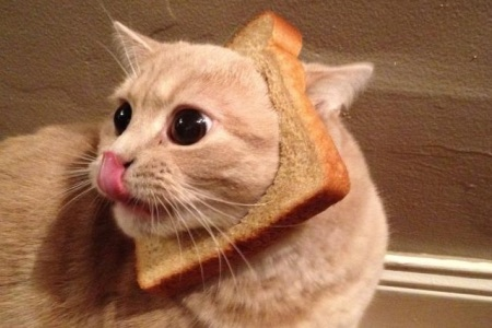 Cat Breading Video