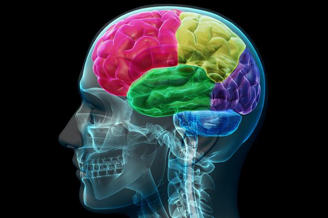 http://4.bp.blogspot.com/-eEa3tc9Swdo/UUYWjUe9UiI/AAAAAAAABhE/wSpkxfwa5RE/s1600/brain.jpg