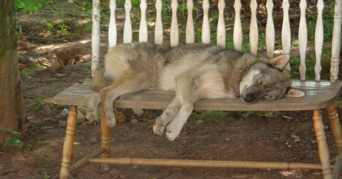 minus 30 grad der tote hund auf der bank. Black Bedroom Furniture Sets. Home Design Ideas