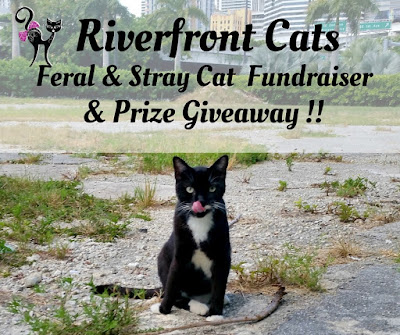 Feral Cats stray cats contest giveaway