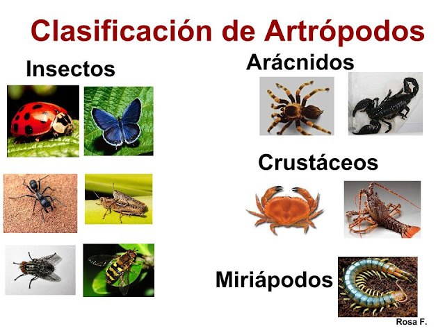 La Chachipedia Artrpodos