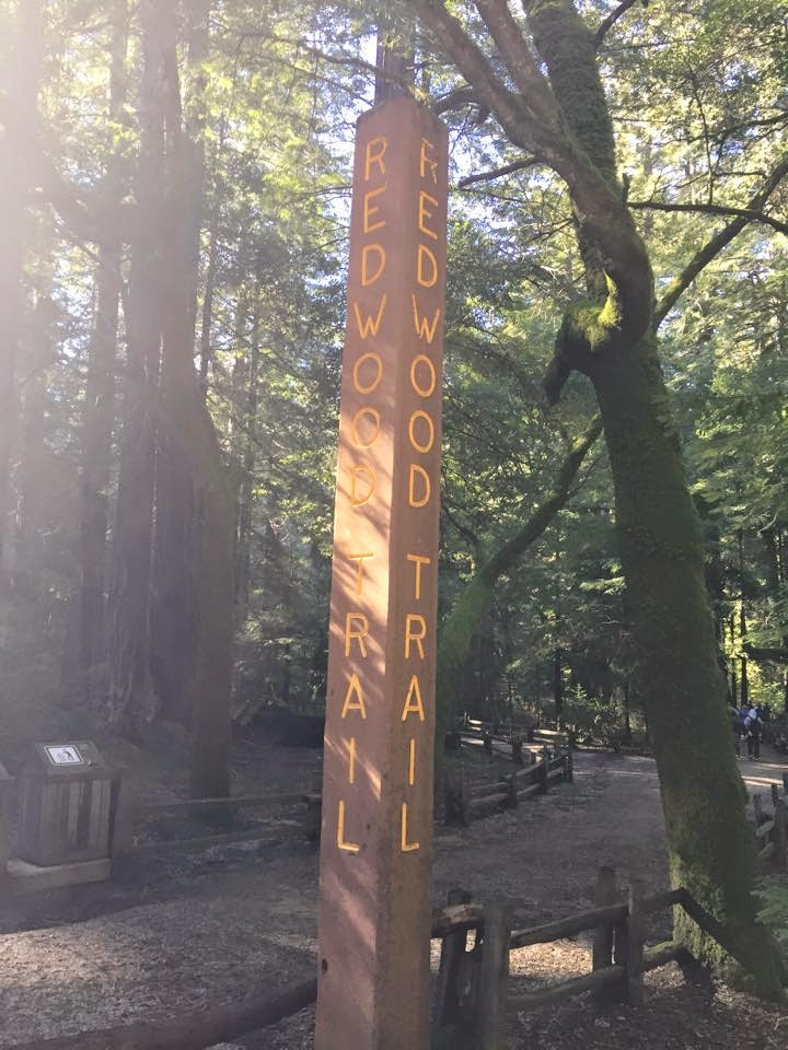 Redwood trail sign post at Big Basin park.
