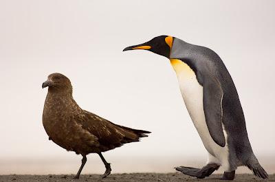 Animalitos caminando sobre la arena de su isla