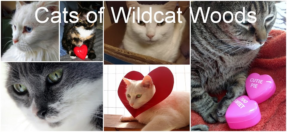 Cats of Wildcat Woods