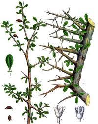 Tratament naturist impotriva starilor de neliniste, agitatiei psihice, incapacitatii de concentrare
