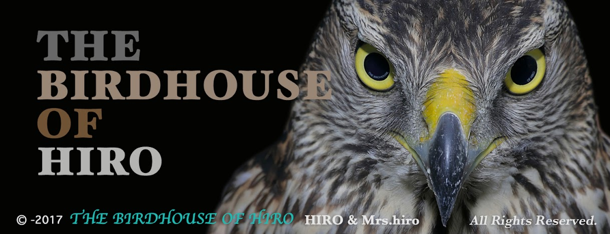 THE BIRDHOUSE OF HIRO